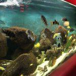 Begrüßt auch mal unsere Fische</br>